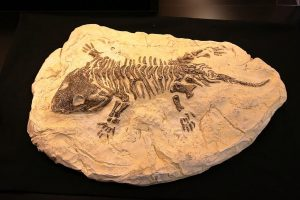 All About Fossils